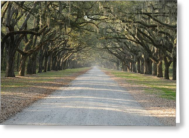 Greeting Card featuring the photograph Oak Avenue by Bradford Martin