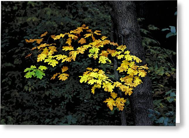 Oak Cluster Greeting Card