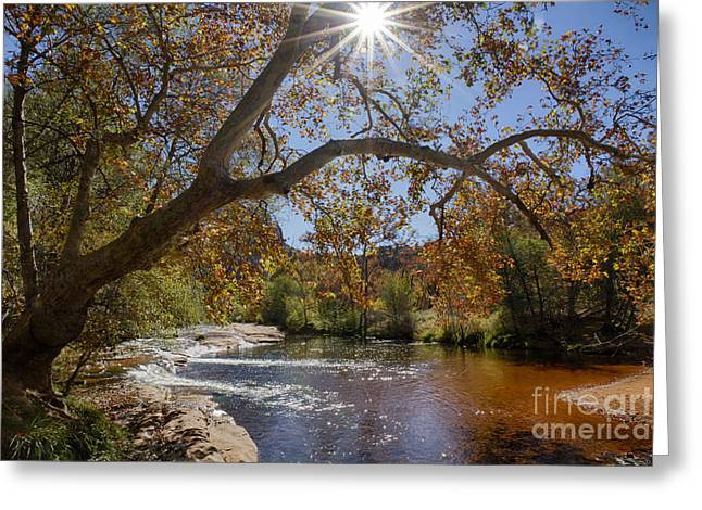 Oak Creek Greeting Card by Idaho Scenic Images Linda Lantzy