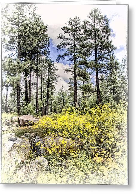 Oak Creek Overlook Vintage Greeting Card