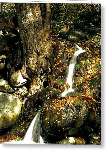 Oak Creek Waterfall Greeting Card by Randy Bradley