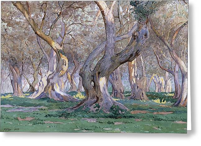 Oak Grove Greeting Card by Gunnar Widforss