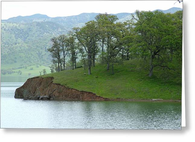 Oak Grove On Lake Berryessa Greeting Card