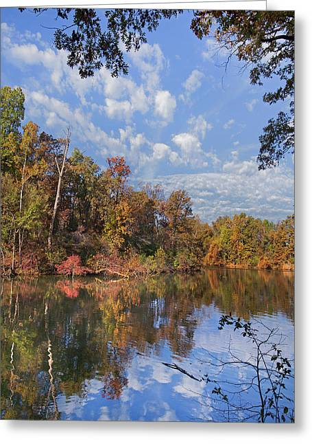 Oak-hickory Forest In Autumn Foliage Greeting Card