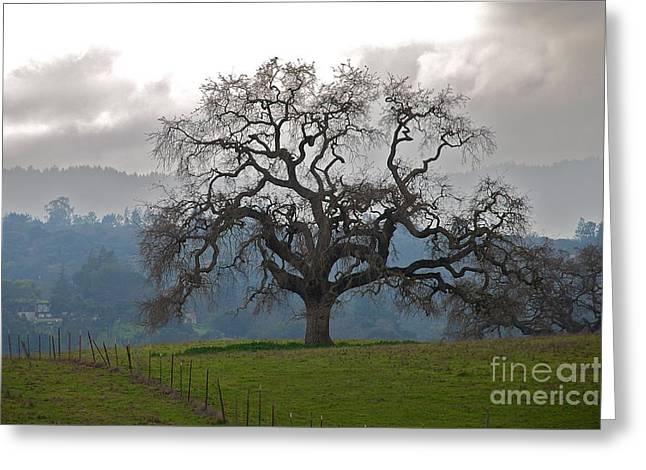 Oak In Fog Greeting Card