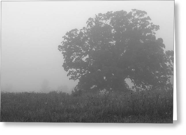 Oak In The Fog Greeting Card