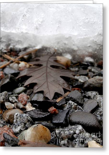 Oak Leaf On A Winter's Day Greeting Card by Steven Valkenberg