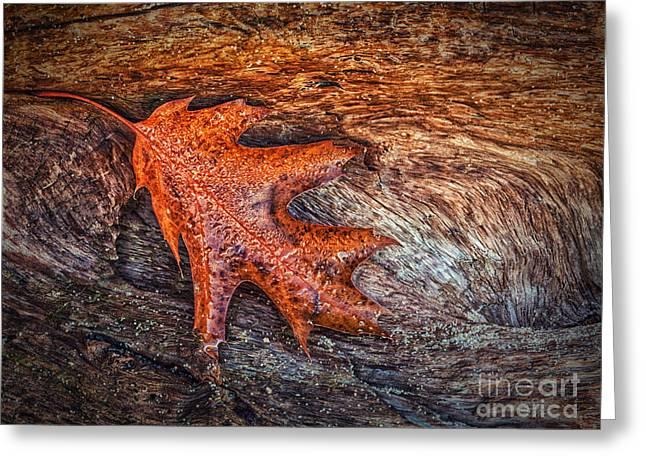 Oak Leaf Greeting Card by Todd Bielby