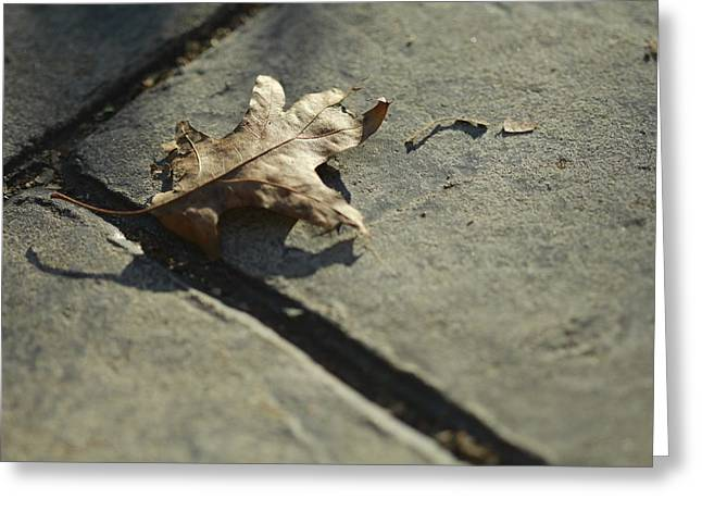Oak Leaf On Autumn Sidewalk Greeting Card by Valerie Collins