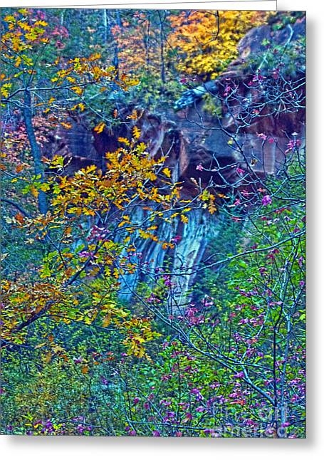 Oak Leaves By The Canyon Wall Greeting Card