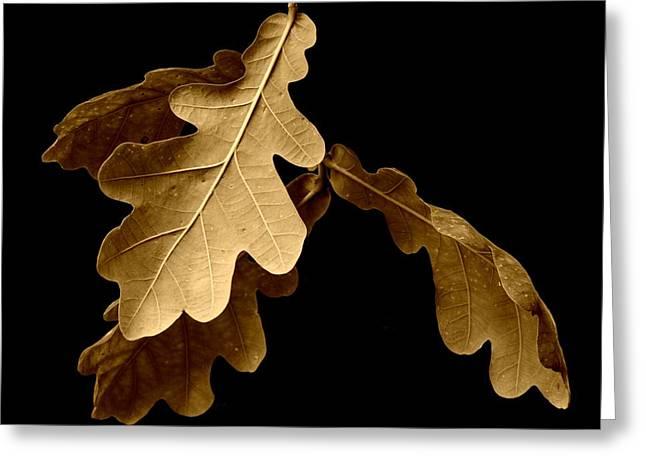 Oak Leaves In Autumn Greeting Card by Bishopston Fine Art