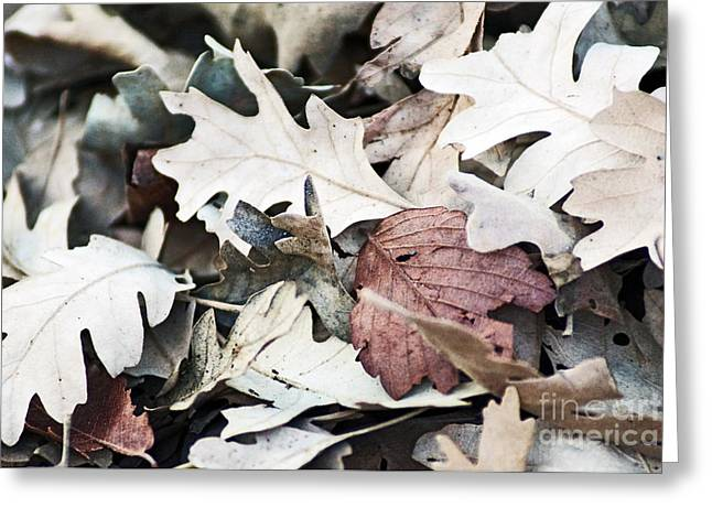Greeting Card featuring the photograph Oak Leaves In Fall by Gary Brandes