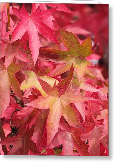 Greeting Card featuring the photograph Oak Leaves In The Fall by E Faithe Lester