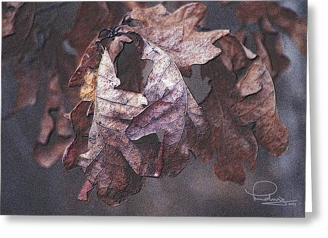 Greeting Card featuring the photograph Oak Leaves by Ludwig Keck