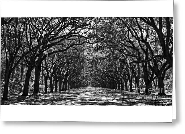 Oak Lined Lane Greeting Card