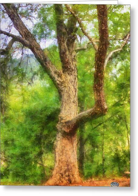 Oak On The Etowah Greeting Card by Daniel Eskridge