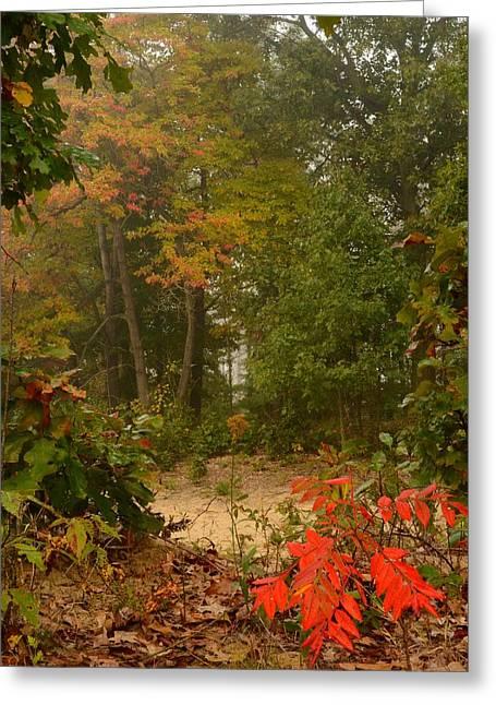 Oak Openings  Greeting Card