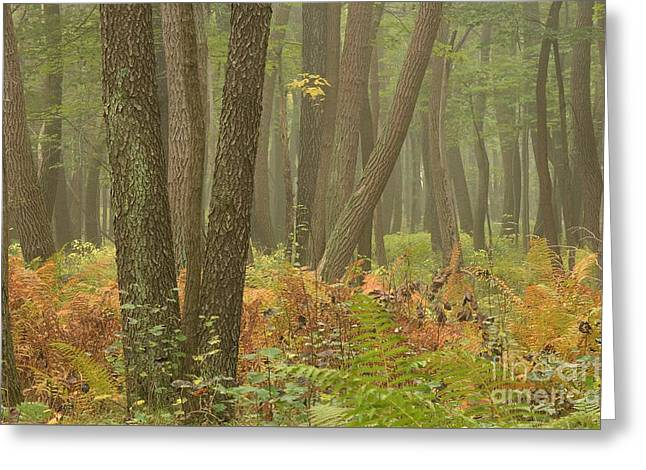 Oak Openings Fog Forest Greeting Card