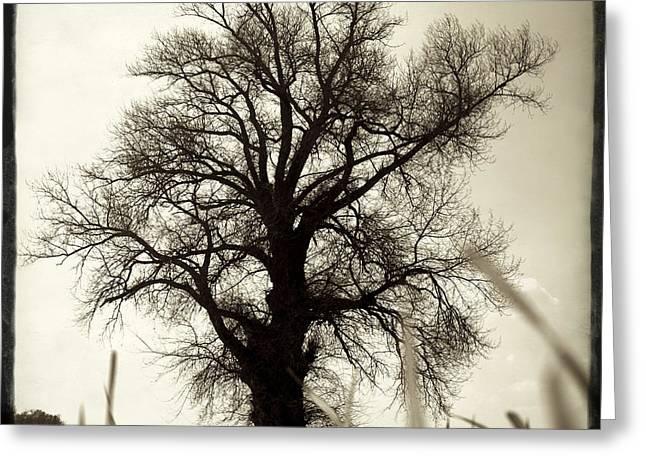 Oak .quercus Sp Greeting Card by Bernard Jaubert