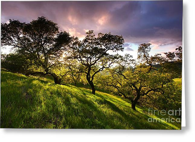 Oak Shadow Gallery At Sunset Mt Diablo State Park California 2013 Greeting Card