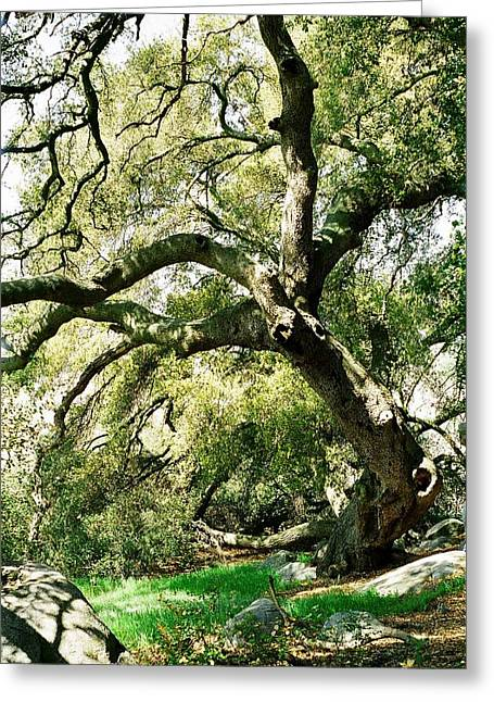 Oak Spirit Greeting Card by Kathy Bassett