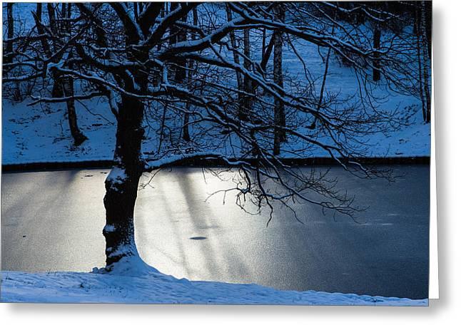 Oak Tree And Winter Sun Greeting Card