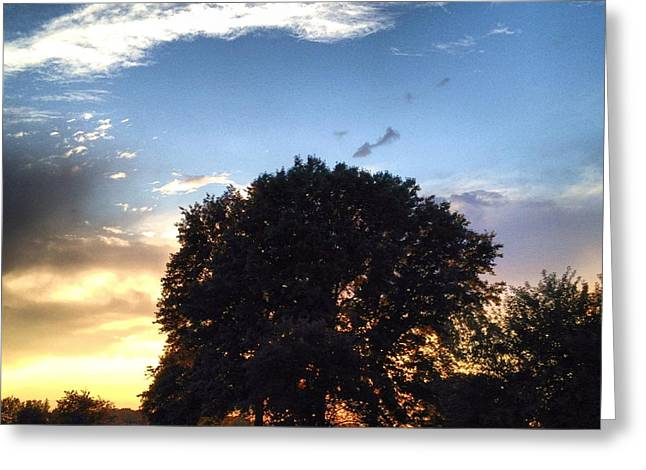 Oak Tree At The Magic Hour Greeting Card