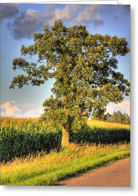 Oak Tree By The Roadside Greeting Card