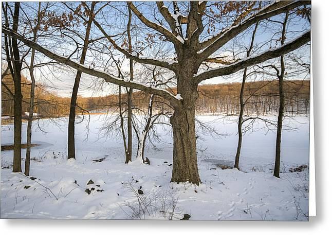 Oak Tree In Snow I Greeting Card