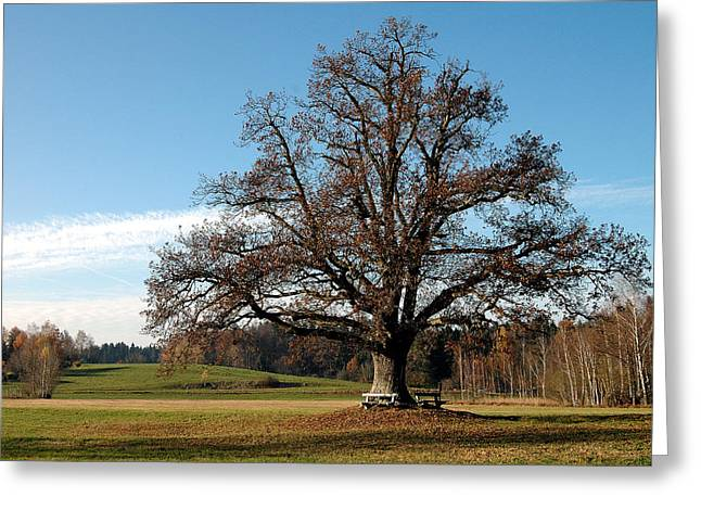 Oak Tree With Benches Greeting Card