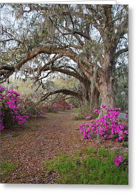 Oak Trees And Azaleas Greeting Card