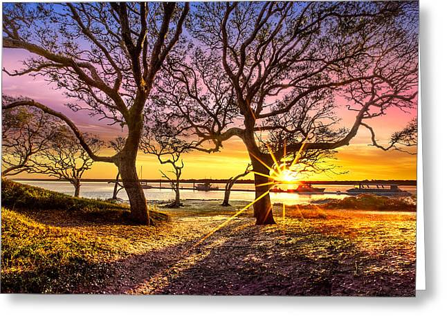 Oak Trees At Sunrise Greeting Card by Debra and Dave Vanderlaan
