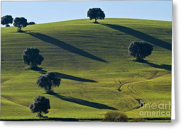 Oak Trees On Grazingland Greeting Card by Heiko Koehrer-Wagner