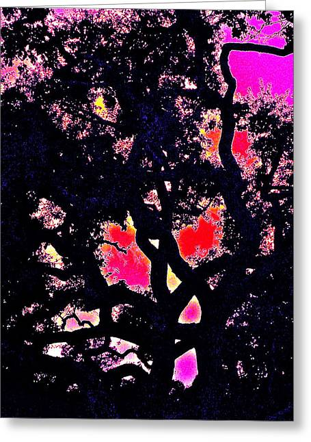 Oaks 10 Greeting Card by Pamela Cooper