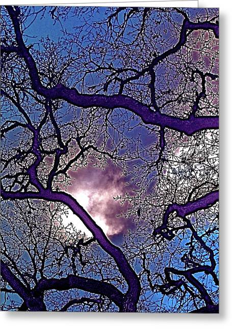 Oaks 11 Greeting Card by Pamela Cooper