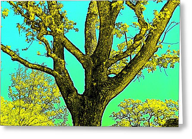 Oaks 3 Greeting Card by Pamela Cooper