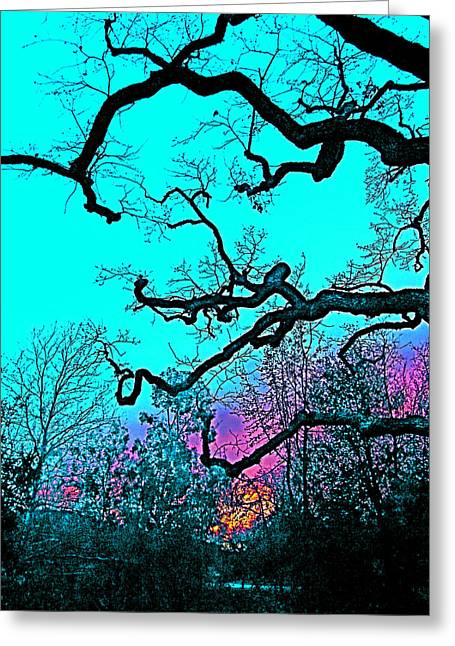 Oaks 4 Greeting Card by Pamela Cooper