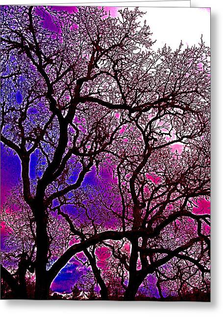 Oaks 6 Greeting Card by Pamela Cooper