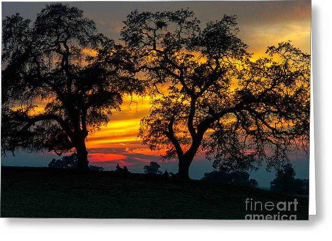 Greeting Card featuring the photograph Oaks And Sunset by Terry Garvin