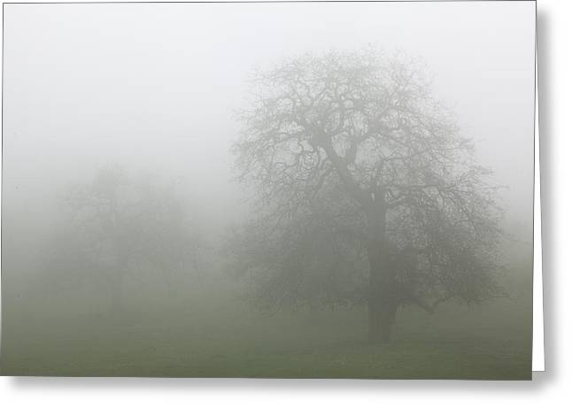 Greeting Card featuring the photograph Oaks In Fog - Central California by Ram Vasudev
