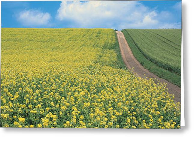 Oats & Rape Blossoms Biei-cho Kamikawa Greeting Card
