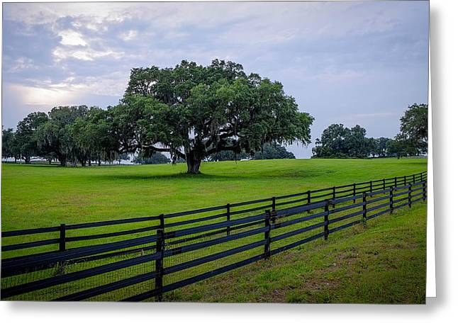 Ocala Pasture Greeting Card by Louis Ferreira