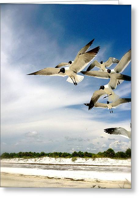 Ocean Birds Greeting Card