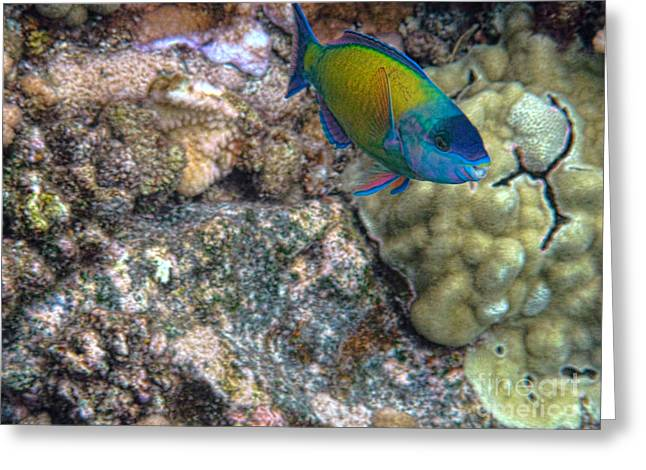 Ocean Color Greeting Card by Peggy Hughes