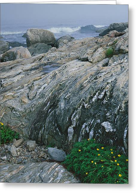 Ocean Point Silver Weed-v Greeting Card