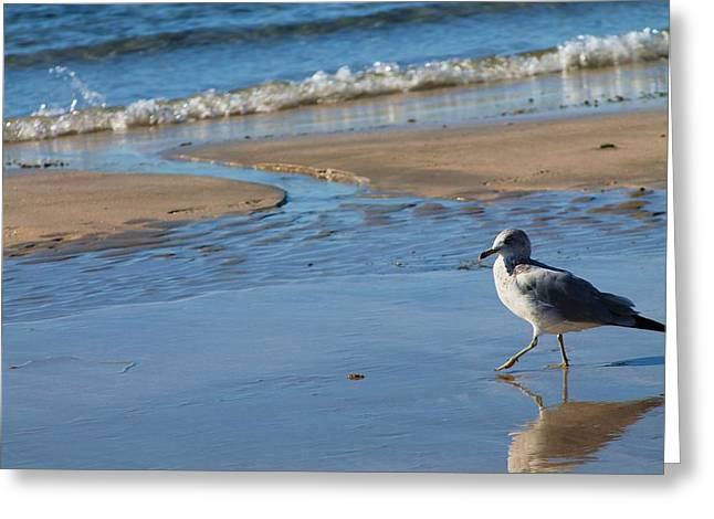 Greeting Card featuring the photograph Ocean Walk by Alicia Knust