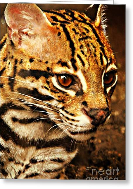 Ocelot Greeting Card by Kathleen Struckle