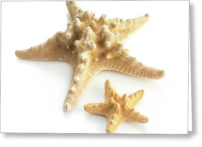 Ochre Sea Star Greeting Card by Science Photo Library