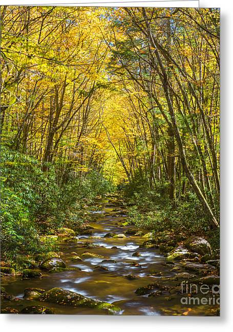 Greeting Card featuring the photograph Oconaluftee Splendor by Carl Amoth