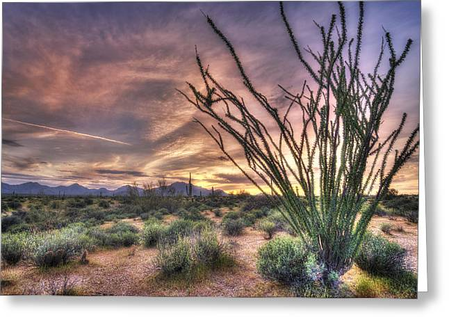 Ocotillo Sunset Greeting Card